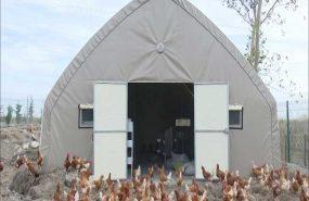 Tavuk Çadırı